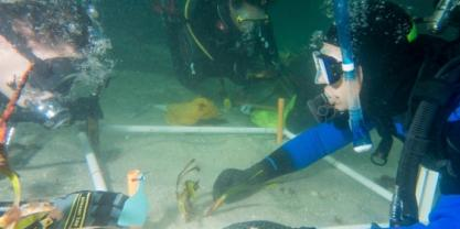 SCUBA divers replant Posidonia australis fragments in Shoal Bay. Picture: Adriana Vergés